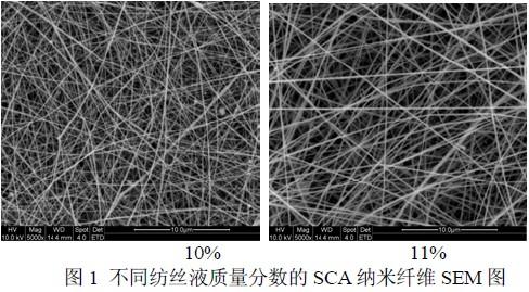 SCA纳米纤维(扫描电镜SEM)